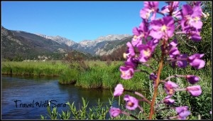 Moraine Park Flowers