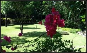 Gumbalina Park Flowers