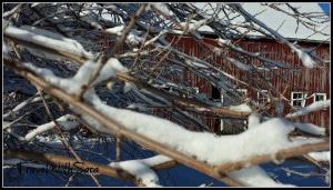 Barn through branches