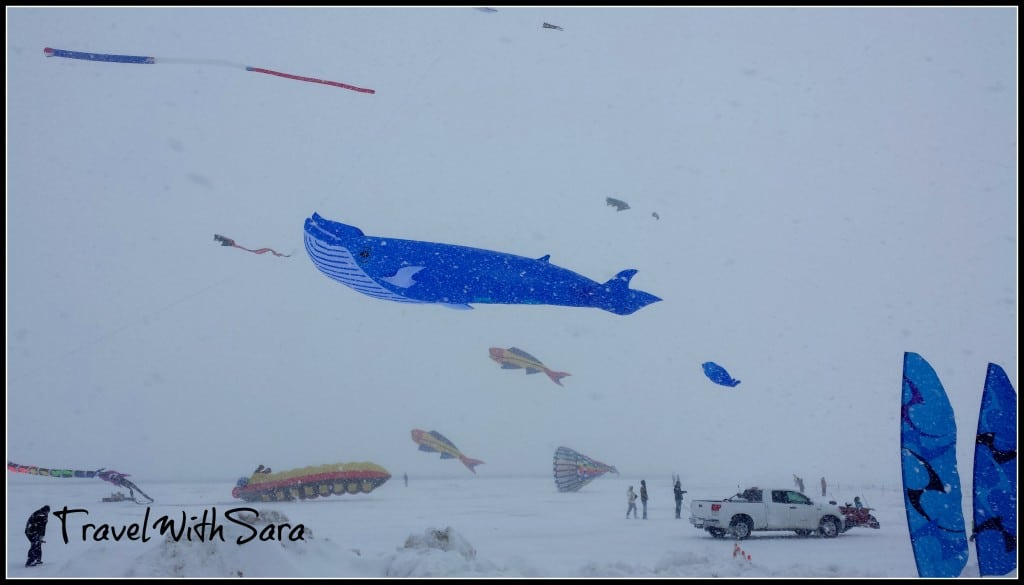 Whale At Kite Festival