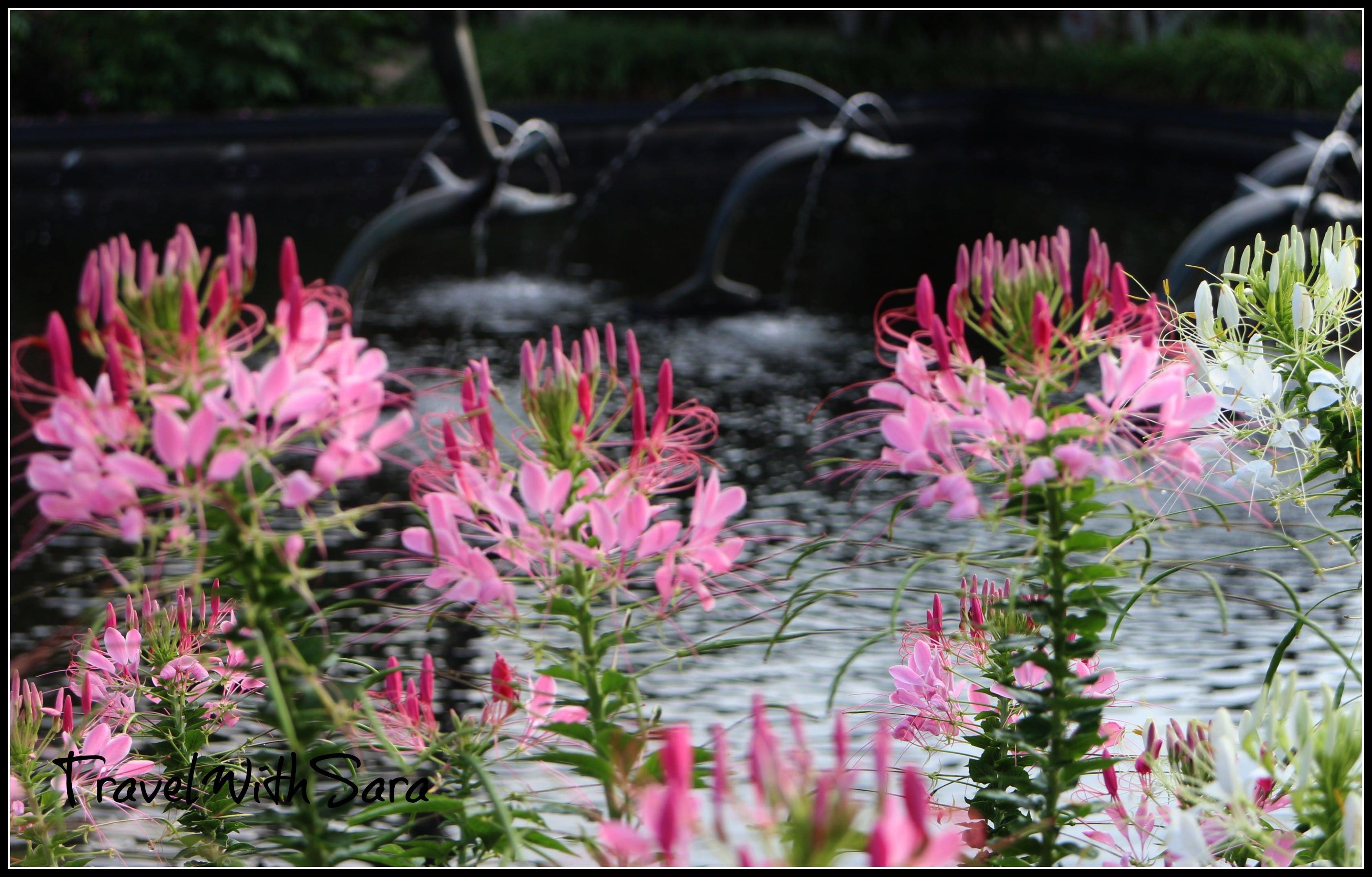 Pink Gardens