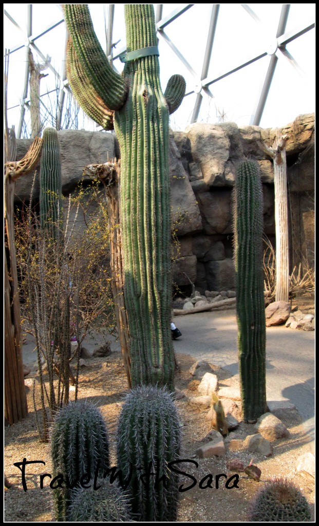 Cactus at Omaha Zoo