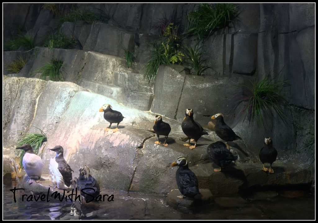 Penguins at Zoo