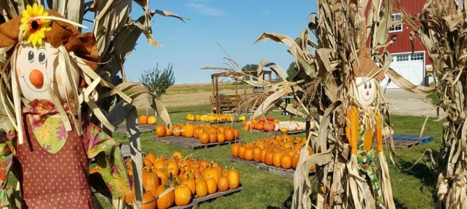 Enchanted Acres: Fall Fun In Iowa
