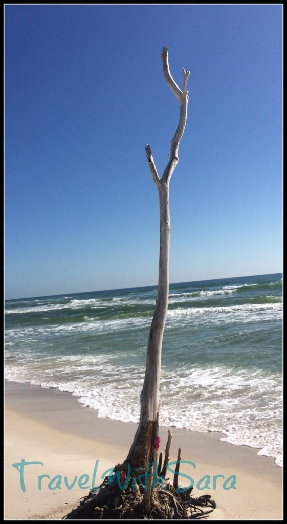Alabama Beach Tree