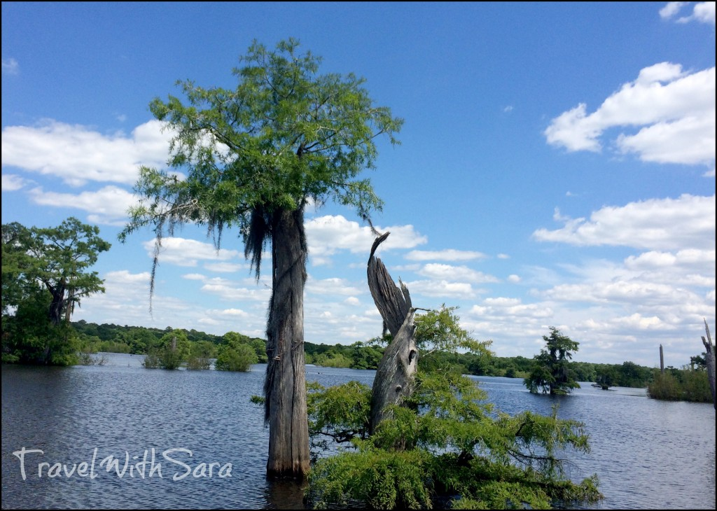 Trees at Dead Lakes