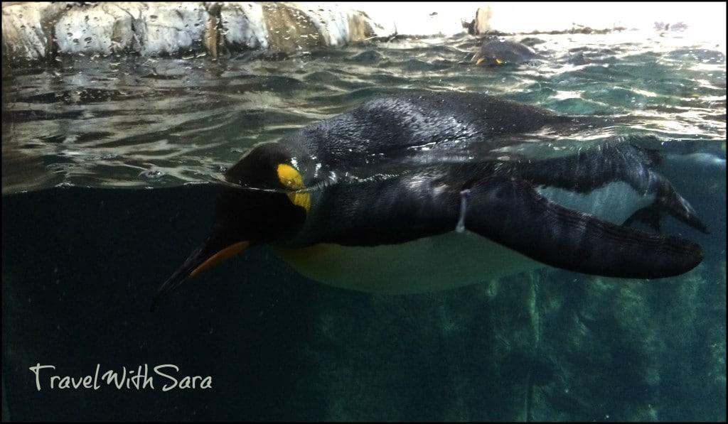 Penguin at Omaha Zoo