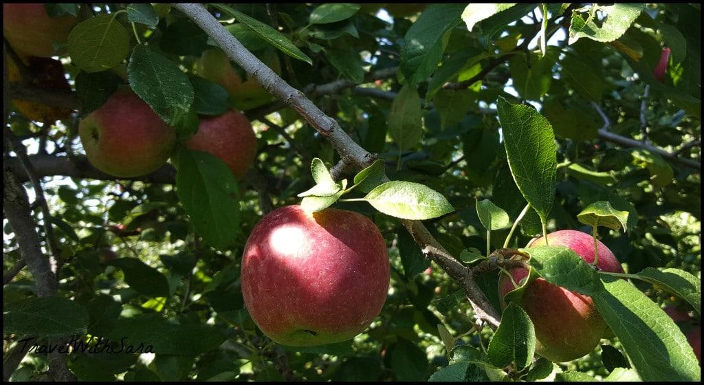 apples at peakes