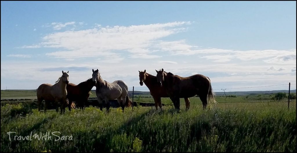 horses in North Dakota