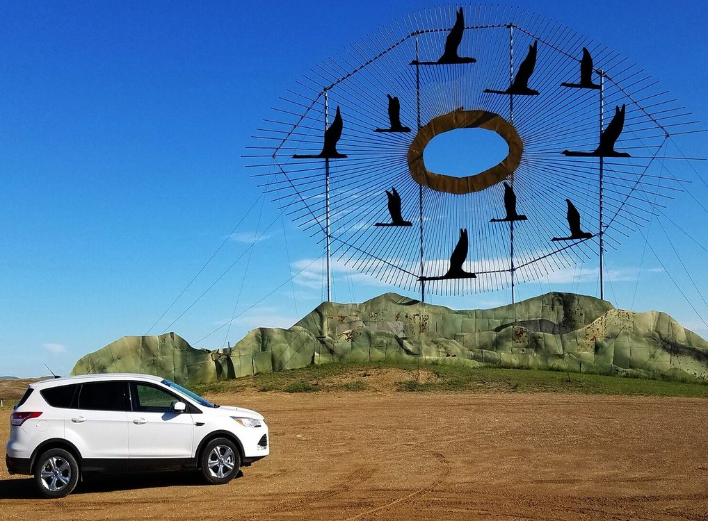 Geese with car feature image