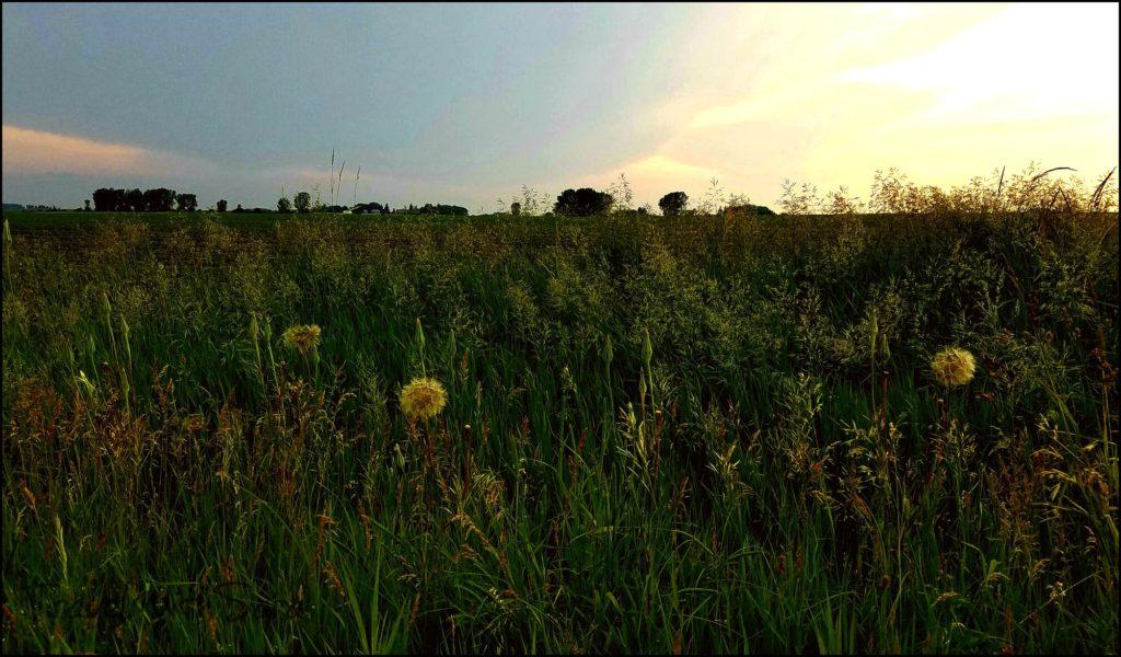Iowa countryside