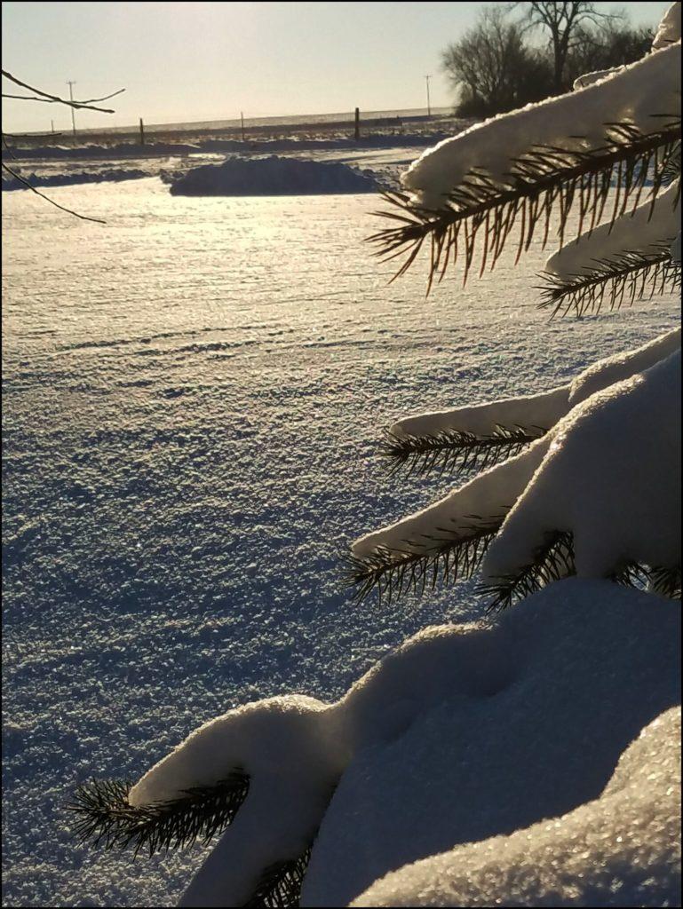 Pine tree with snow