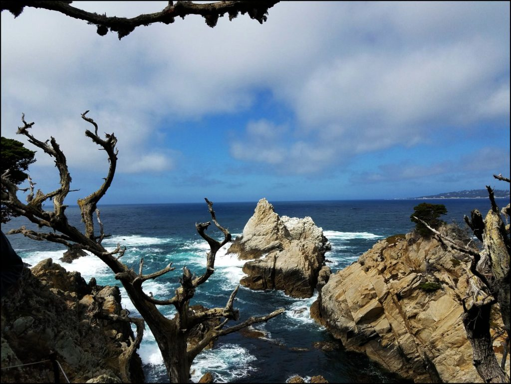 Point Lobos View