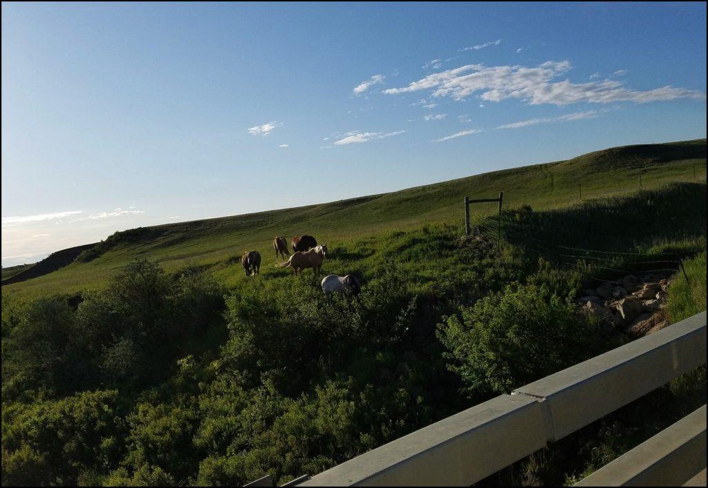horses in North Dakota