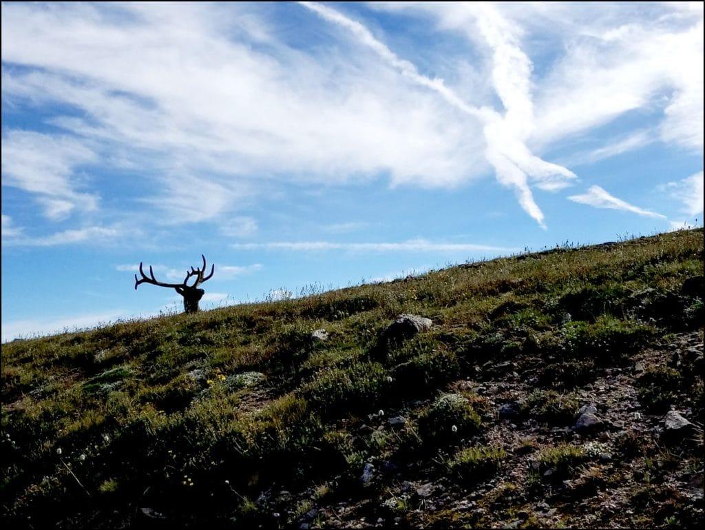 elk on hilltop