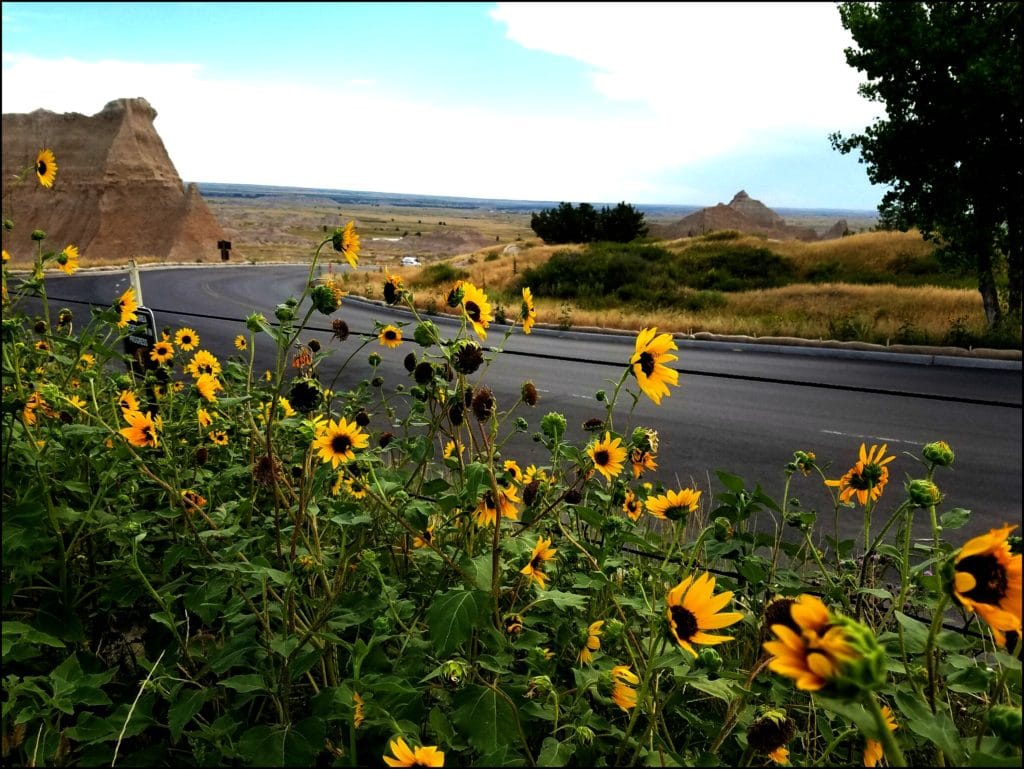 Wildflowers Badlands