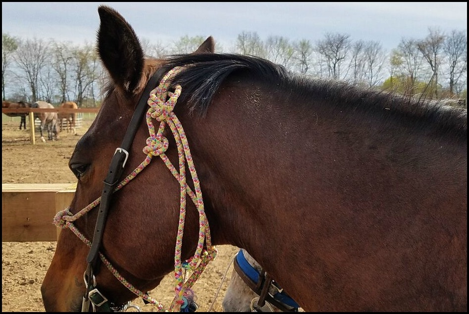 Horse in Indiana