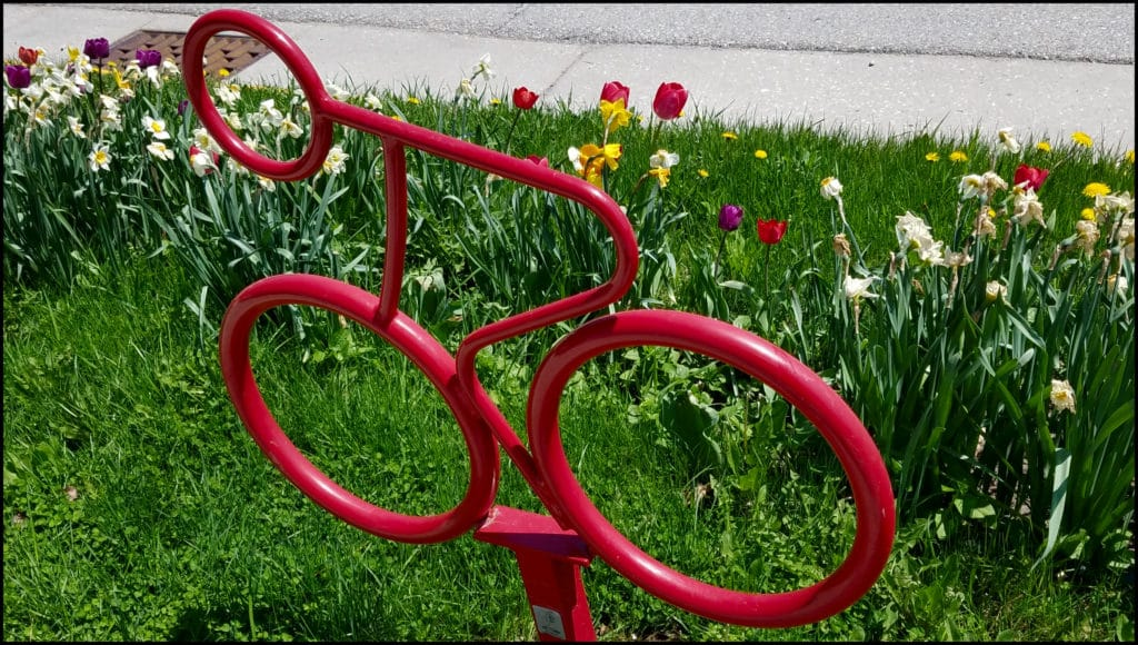 BicyclesTulips
