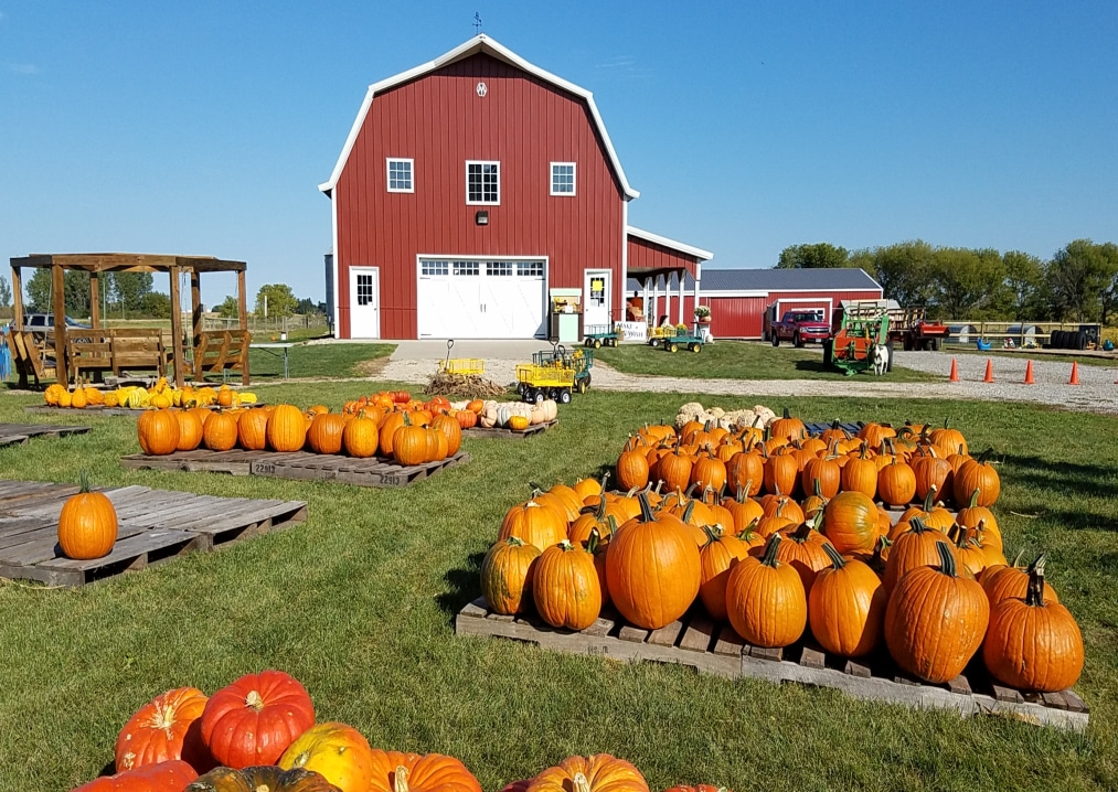 Six Pumpkin Patches & Apple Orchards That You Must Visit In The Midwest
