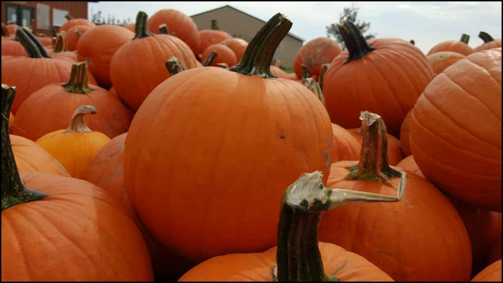 Pinters Pumpkins