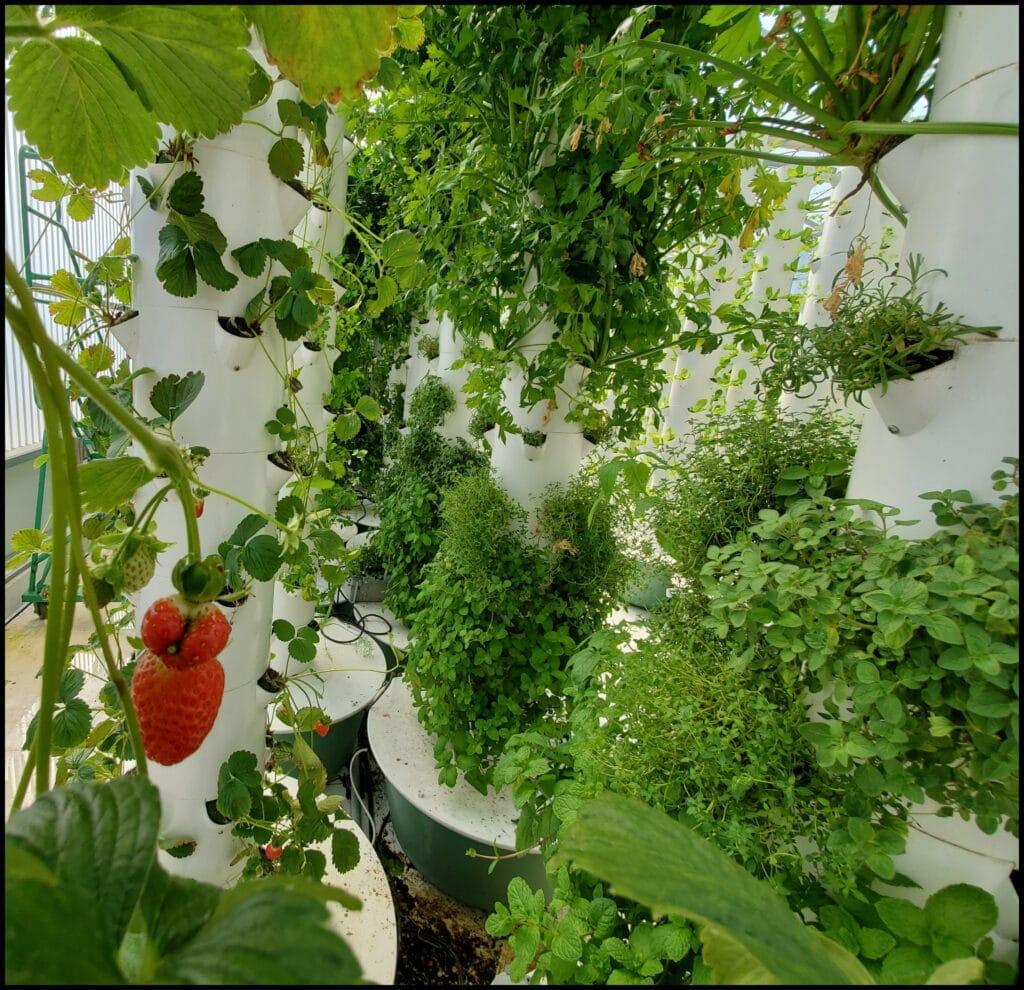 Vertical Garden Mesa