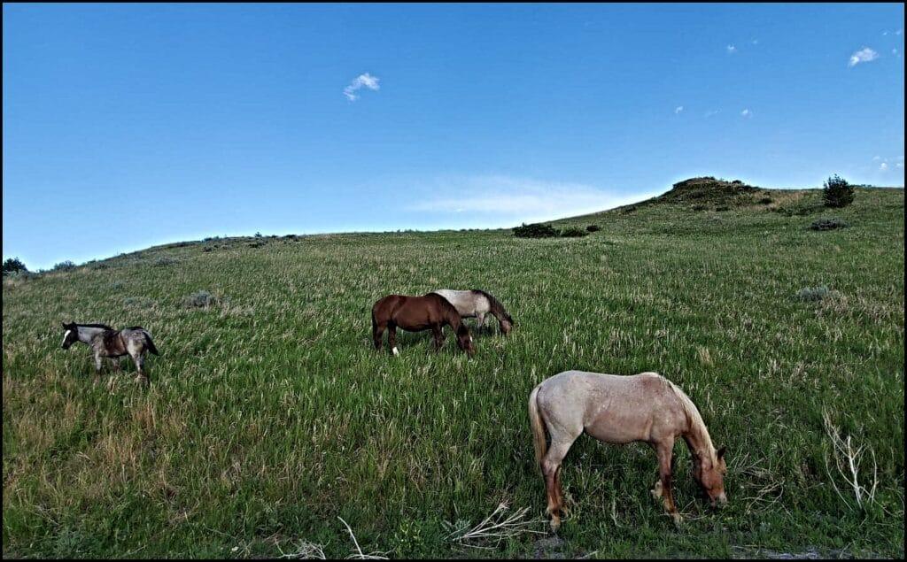 horses national park