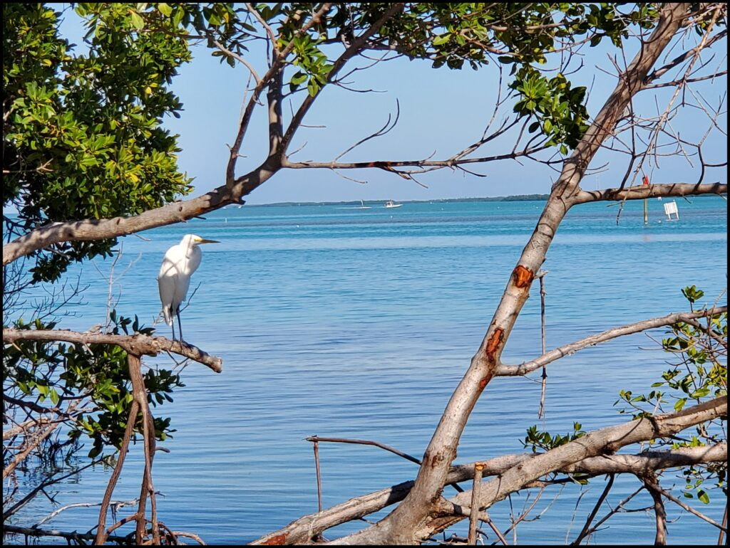 Birding at Robbies best place to stay in Florida Keys