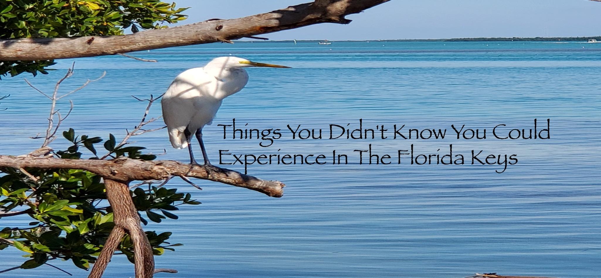 Florida Keys Birding