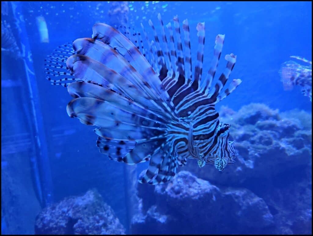 aquarium things to do in Key west
