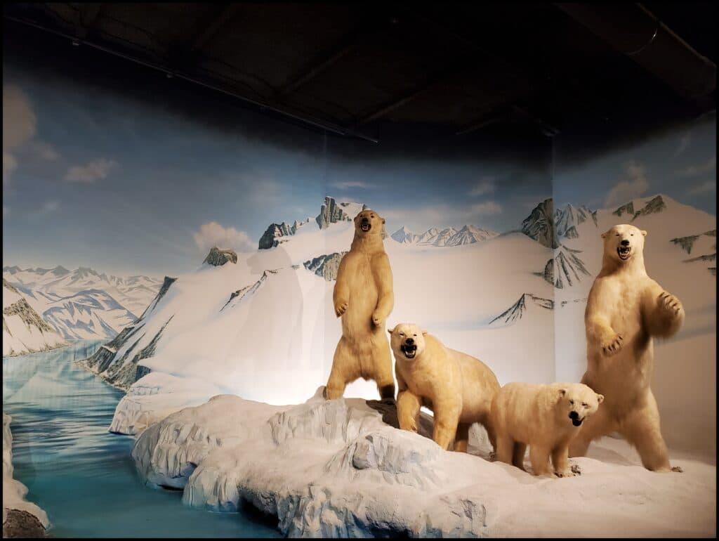 Museum Salina Zoo