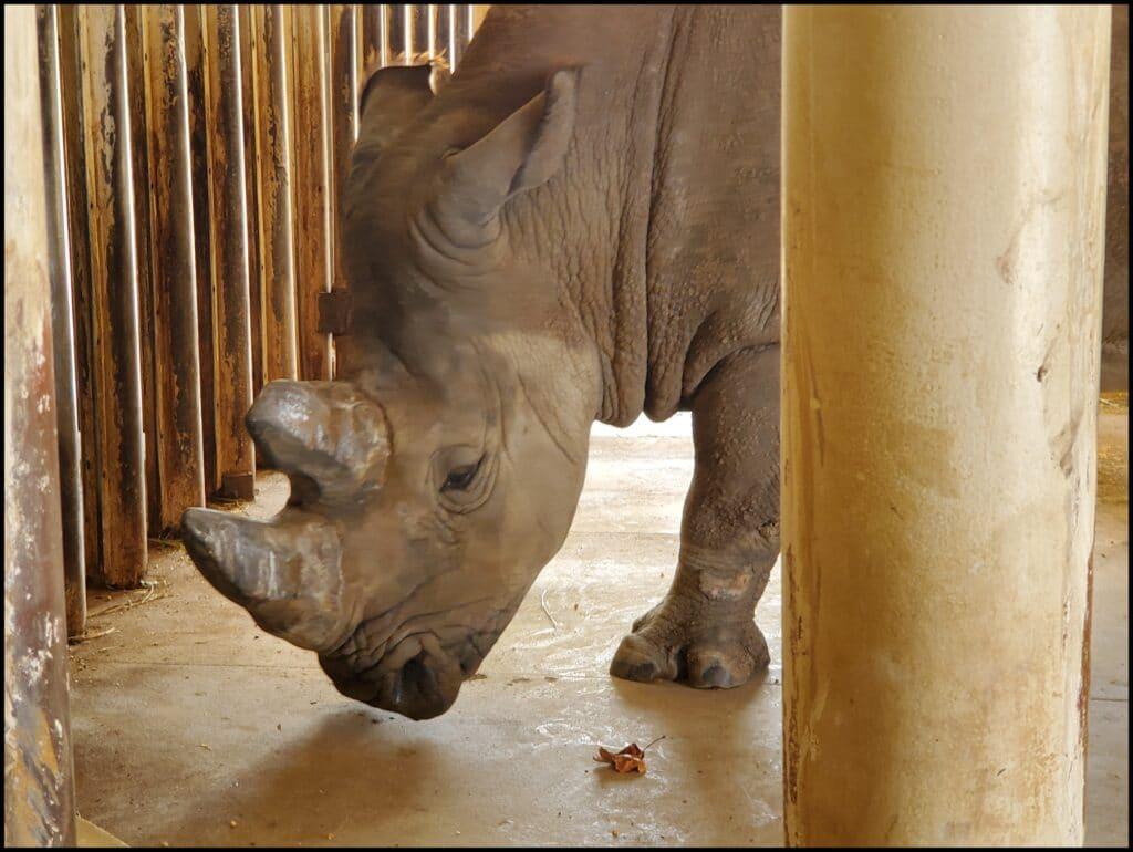 rhino salina zoo